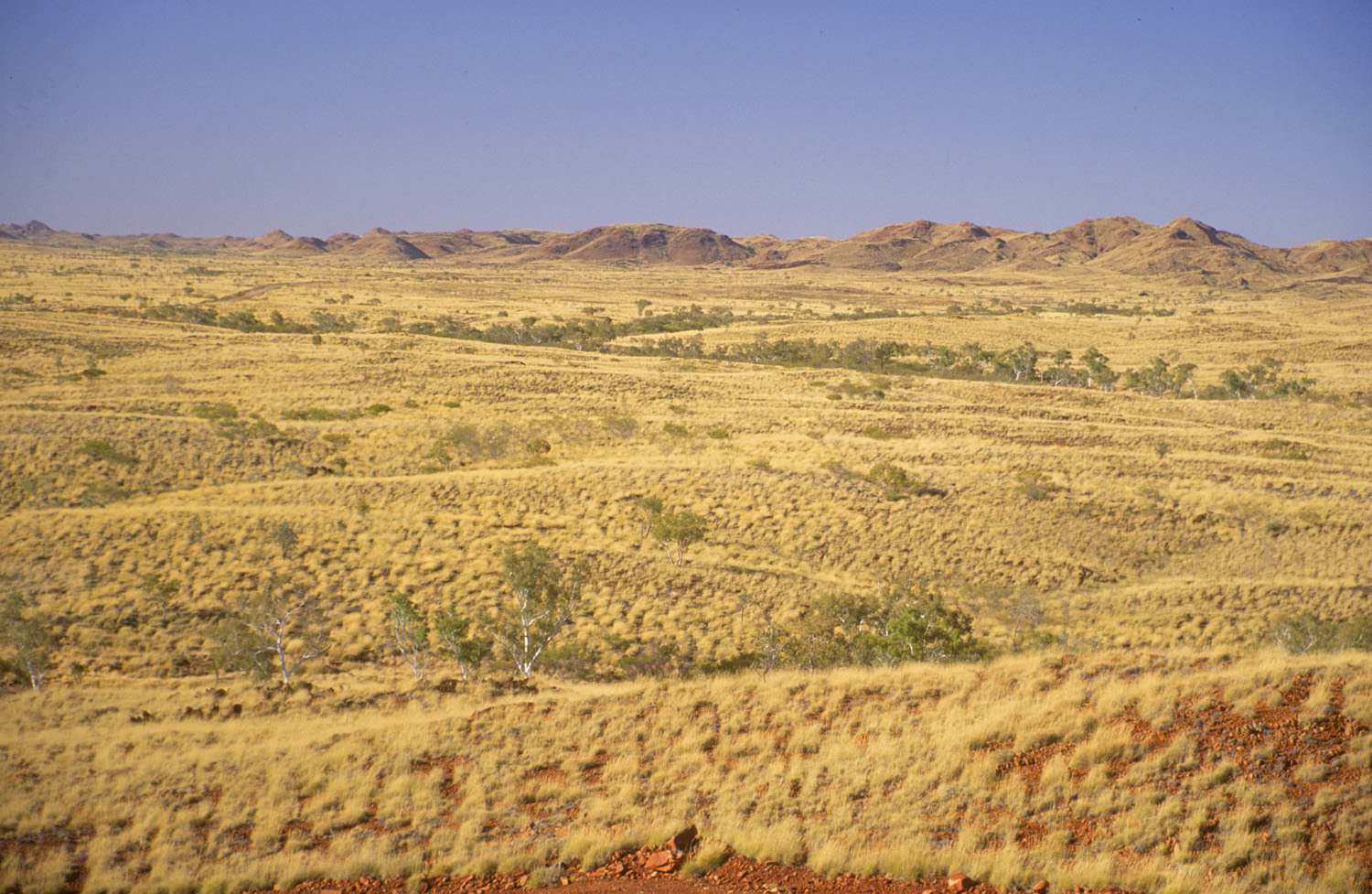 Rolling hills covered in spinifex - near Marble Bar, WA