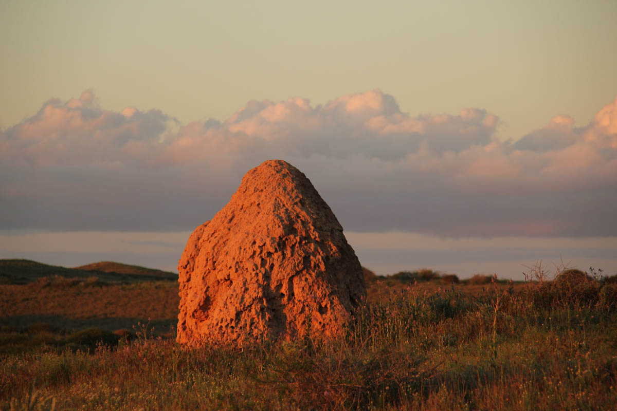 Termite mound - at sunset - near Coral Bay, WA