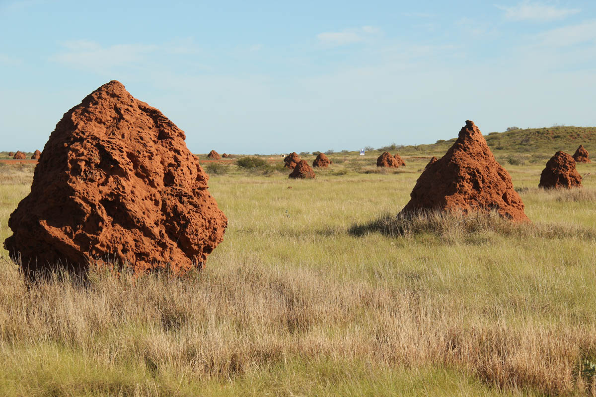 Termite mounds - near Onslow - Pilbara, WA