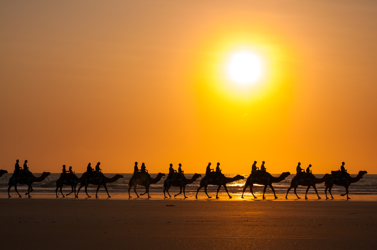 1. Cable Beach camels