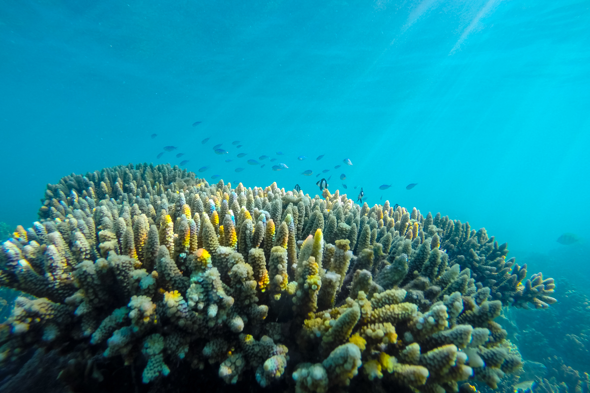 Ningaloo reef versus the great barrier reef without a - Ningaloo reef dive ...