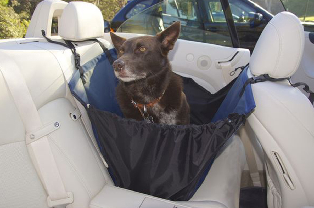 dog sitting in a back seat basket, installed in the backseat of the car