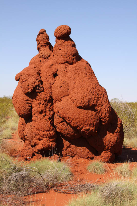 Understanding Termite Mounds Without A Hitch Without A Hitch
